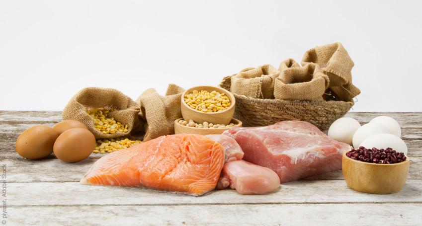 newdiet proteindiät